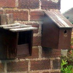 Installer un nichoir : les dix commandements à respecter  | Ornithomedia.com