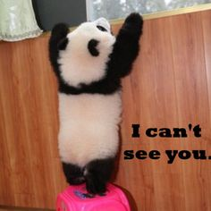 A little help? This is so cute. I am so in love with little panda bears. They are truly some of the cutest animals on Earth Also panda's are my favorite animal Cute Baby Animals, Funny Animals, Baby Pandas, Wild Animals, Panda Babies, Baby Panda Bears, Giant Pandas, Baby Dogs, Photo Panda