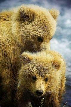 Couple cute bear cubs