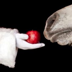 Santa handing a horse an apple