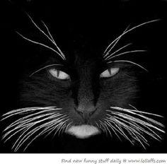 cat black white whiskers