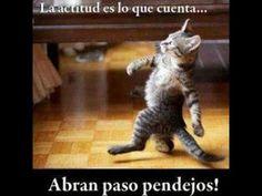 "Gatos graciosos - Funny Cats - http://dailyfunnypets.com/videos/dogs/gatos-graciosos-funny-cats/ - Los gatitos mas graciosos del mundo funny cat"" ""kitty"" ""cats videos"" ""cats 2013"" ""funniest cats"" ""cats"" ""pictures cats"" ""cats videos"" ""kitten videos"" ""compilation"" ""2013"" ""cats vs dogs"" ""cats... - (animal), (film), animals, cat, cats, character), crossing, dog, dogs, el, funny, gatos, humor, locos, mejor, perros, pets, video"