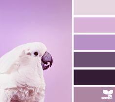 Color Squawk - http://design-seeds.com/index.php/home/entry/color-squawk3