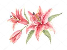 Watercolor Background, Watercolor Flowers, Flower Sketches, Drawing Sketches, Sketching, Lily Painting, Watercolor Painting, Lilies Drawing, Birthday Tattoo