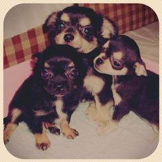 Tsuki's brothers.  - @honey_013- #webstagram