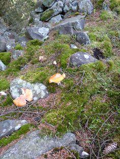 Bitten Mushroom. Beecraigs Country Park
