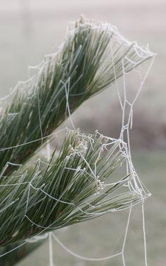 spider web with freezing fog.