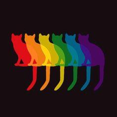 Nos gatinhos
