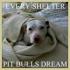 Please adopted or rescue save a life BC their lives always matter's so please Don't shop adopted or rescue