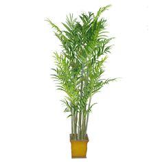 3.5M Samll Silk Areca Palm Tree 748 Leaves Small Palm Trees, Small Palms, Herbs, Leaves, Silk, Herb, Silk Sarees, Medicinal Plants