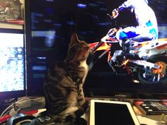 Looks like Apollo is a Ryan Dungey fan :)