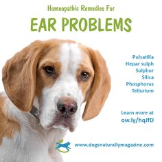 Although chronic healthy issues are best addressed by a classical homeopathic veterinarian, here are some remedies you can try for acute flare ups.  http://www.dogsnaturallymagazine.com/homeopathic-remedies-for-ear-problems-in-dogs/