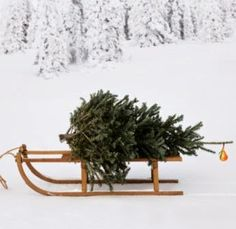 """merrrylittlechristmas: """" Have yourself a merry little Christmas """" happy holidays ❅ Christmas Tree Farm, Christmas Time Is Here, Merry Little Christmas, Noel Christmas, Country Christmas, Winter Christmas, Winter Holidays, All Things Christmas, Natural Christmas"""
