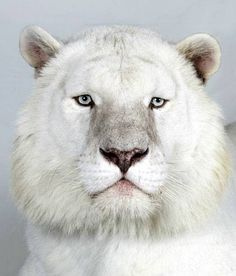 Beautiful animal photos that ive collected over the years they beautiful animal photos that ive collected over the years they now have found a home on pinterest yay animals pets wildlifebeautiful cut voltagebd Image collections