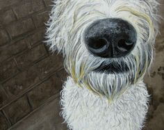 "Robyn Millar  Charlie Nose  10""x8""  Acrylic on canvas"