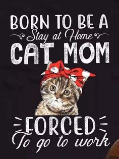 Born to be a cat mom - Funny Cat Quotes Source by ulizeidler videos wallpaper cat cat memes cat videos cat memes cat quotes cats cats pictures cats videos Crazy Cat Lady, Crazy Cats, I Love Cats, Cool Cats, Gatos Cats, Cats Diy, Here Kitty Kitty, Cat Life, Cat Memes