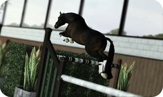 Sims 3 Horses Jumping | Re: NorthGate Warmbloods's Free Jumping Show! [OPEN]