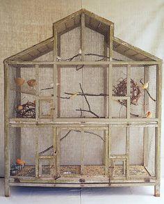 martha's birdcage