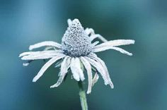 Winter Gardening: Nine Striking Plant Ideas. birdsandblooms.com