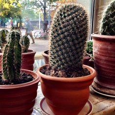 UDUMBARA Studio & Gallery: UDUMBARA  planters