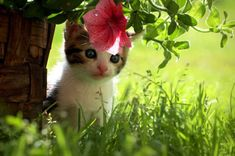 b. Find images and videos about cute, funny and flowers on We Heart It - the app to get lost in what you love. I Love Cats, Cute Cats, Funny Cats, Kittens Cutest, Cats And Kittens, Fluffy Kittens, We Heart It, Kitten Photos, Cat Flowers