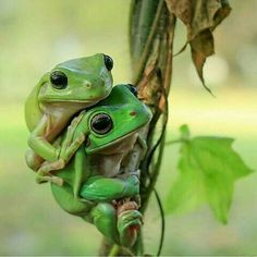 """""""Oh get off my back""""! :D"""
