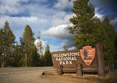 Take your family to Yellowstone this summer! Kickstart your trip planning by reading this article.