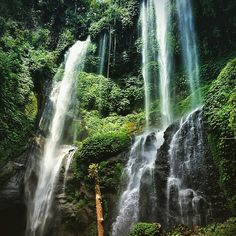 Sekumpul Waterfall! Have you been here? This is must to visit in Paradise island   ============================== Photo by ren8585 Thanks for sharing.  NOTE : KEEP BALI CLEAN IF WANT TO REGRAM FROM THIS PAGE PLEASE MENTION @fascinatingbali & PHOTO'S OWNER. THANKS  ============================== Visit our Site (link on Bio) Keep use hashtag #fascinatingbali to allow Us feature your moment in Bali ============================== #sekumpul #waterfall #bali #paradise #motherofnature…