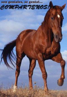 Dibujos de caballos » CABALLOPEDIA