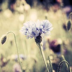 Meadow Flowers Vintage - Tap to see more beautiful vintage nature photography wallpapers! - @mobile9