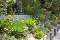Image result for low maintenance garden