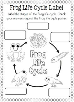 Worksheets Life Cycle Of A Frog Worksheet 1st grade science life cycles and grades on pinterest