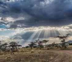 Serengeti National Park Safaris and Tours - View Prices and Packages Serengeti National Park, Niagara Falls, Safari, Waterfall, National Parks, Africa, Tours, World, Travel