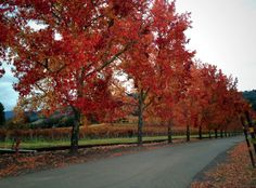 Fall in Wine Country—here's an update about what's going on in Napa and Sonoma.