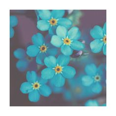 Narue Photography Flower Photo Forget me not Fine Art Macro... (€14) ❤ liked on Polyvore featuring home, home decor, wall art, backgrounds, photo wall art, photographic wall art, flower stem, blue home decor and blue wall art