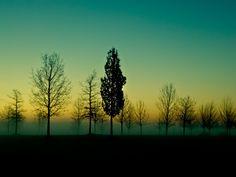 Emerging Dawn. San Giuliano Park, Venice, 2013