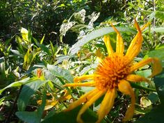 #sunflower #forest