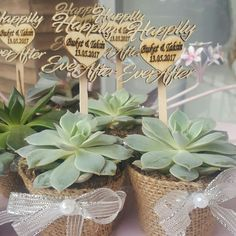 Gift for wedding.succulent Nikah hediyesi olarak  succulent