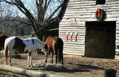 Are Christmas Decorations Poisonous to Horses?