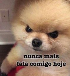 Nunca mais fala comigo hoje Funny Jokes To Tell, Funny Fails, Funny Texts, Funny Quotes About Life, Life Quotes, Appreciation Images, Reaction Pictures, Funny Pictures, Good Morning Song