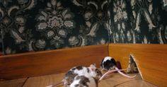 Heb je muizen in huis maar wil je ze verjagen zonder gif? Probeer dit vooraleer je de Bazooka boven haalt! Painting, Animals, Animales, Animaux, Painting Art, Paintings, Animal, Animais, Painted Canvas