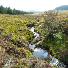 The River Llyfnant falls from Llyn Penrhaeadr through Cwm Rhaeadr before feeding Pistyll y Llyn waterfall. #powys #wales #cymru #thebigcountry #igerswales #igerscymru #photooftheday #picoftheday #ic_landscapes #icu_britain #ig_britishisles #icu_britain_sky #ig_cameras_united #ig_uk #ukpotd #icu_wales #photosoftheuk #photosofwales #scenesofbritain #scenesofwales #britains_talent #PGdaily #loves_united_kingdom #samsungsmartcamera #Padgram