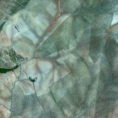 Olive tree plantations on the hills of Córdoba, Spain