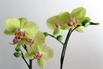 9 rules to water orchids correctly.