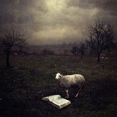 Beautiful and strange.  I would like to know what he is reading.