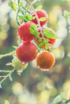 mlodzikova cherry dream-3