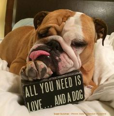 "♥ That says it all ♥ Posted on Baggy Bulldogs It should say a ""Bulldog"" HA"