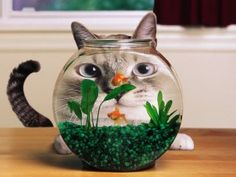 Funny Cat Fish Pond Wallpaper