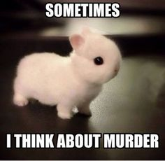 Hilarious Memes Sarcasm You Dont Say Laughing 2 Cute Animal Memes, Cute Funny Animals, Funny Cute, Funny Farm, Animal Facts, Cute Baby Bunnies, Funny Bunnies, Cute Babies, Bunny Meme