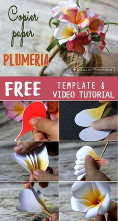 How to make plumeria paper bouquet fast and easy free template how to make plumeria paper bouquet fast and easy free template mightylinksfo